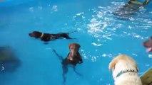 Un chien qui ne sait pas nager - Trop marrant!