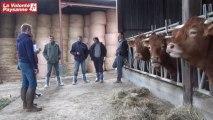 Bovins viande et parasitisme (Aveyron)