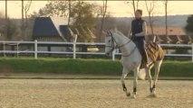 Equitation : Silvana - Kevin Staut, le tandem normand gagnant du saut d'obstacles