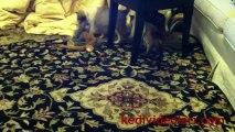 Sevimli Kedicik Ve İnginç Anlar