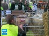 Manifestation des éleveurs avec leurs brebis à Troyes