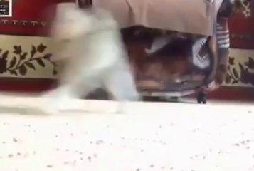 Yavru Kedinin Kablumbağ ile imtihanı