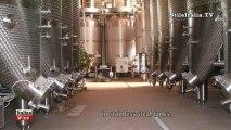 Italian Wine - Romano dal Forno -  Amarone