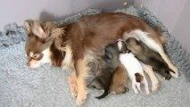 Galice et ses bébés ou le repas des 4 morfalous