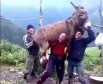Un homme soulève un âne avec sa force