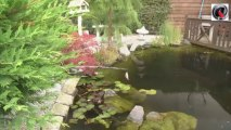 Nordic pond tour - bassin de jardin Nordic