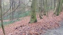 Aitch et Spot courent dans la Forêt de Soignes, Bruxelles