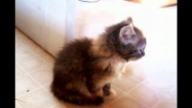 Adorable Kittens Compilation... So funny animals!