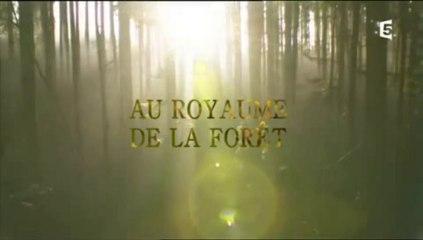 Au royaume de la forêt (1)