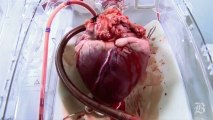 Beating heart aftr removal frm body- SUBHAN ALLAH
