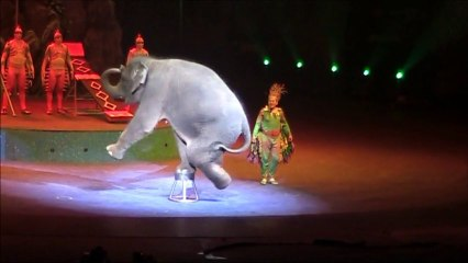 I couldn't believe elephants could do this.  - Chimelong International Circus, Guangzhou, China