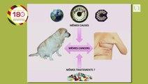 Laetitia JAILLARDON – Biologie « Identification et validation du carcinome mammaire spontané canin comme modèle d'étude des interactions entre régulateurs de croissance, obésité et cancer du sein »
