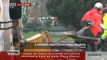 5 arbres abattus au parc Vauban (Lille)
