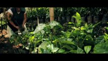 Coffee Beans - The story behind our coffee beans