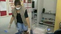 Monkey in Brazil fed with human breast milk