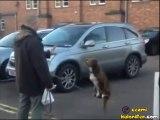 Akrobat Köpek
