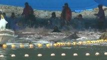 Dolphins killed in Japan's Taiji cove