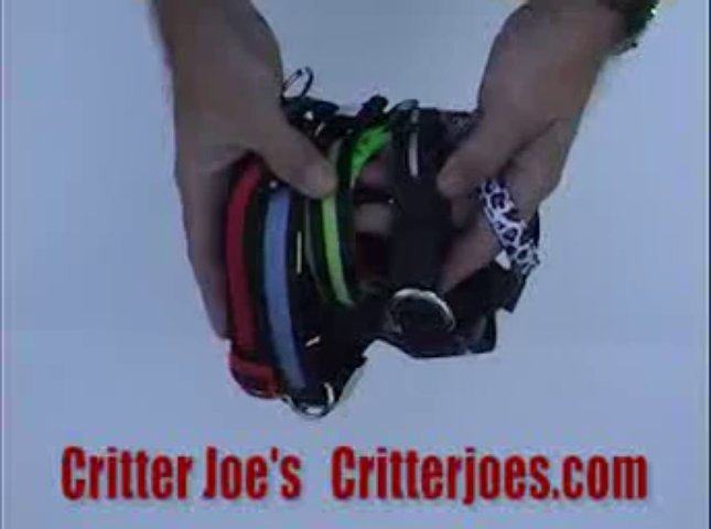 Critter Joes Pet Product Video LED Collar – Fully Rechargeable