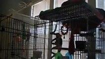 Parrot Sings Let The Bodies Hit The Floor