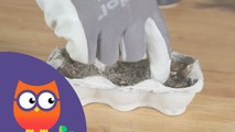 Comment faire un semis en intérieur (Ooreka.fr)