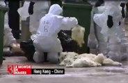 Zap télé: Exécution massive de poulets, les «bras cassés» du gouvernement