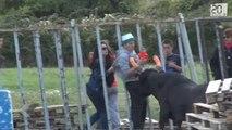 Trop près des grilles , il se prend un taureau