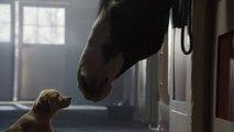 "[Super Bowl 2014] Budweiser Super Bowl XLVIII Commercial - ""Puppy Love"""