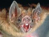 Resident Evil 5-4/ Une grosse chauve-souris.
