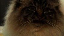 Meno animali in casa forse per la crisi, più amato resta Fido