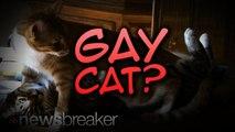 GAY CAT?: Nigerian Woman Kicks Out Pet Because She Says He Has Homosexual Tendencies
