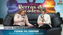 PERRAS DE CADENA 29 DE ENERO DE 2014