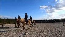 cheval saut 1