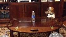 Un chien qui adore les bouteilles d'eau!