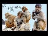 natraj behera orissa cricket team (7)