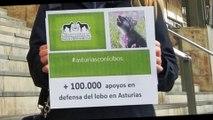 100000 Firmas en defensa de los LOBOS en Asturias
