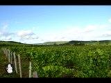 Leonard Vins et Terroirs ouvre ses portes aux amateurs de vins
