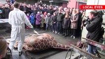 Vidéo : un zoo danois tue une girafe pour éviter la consanguinité
