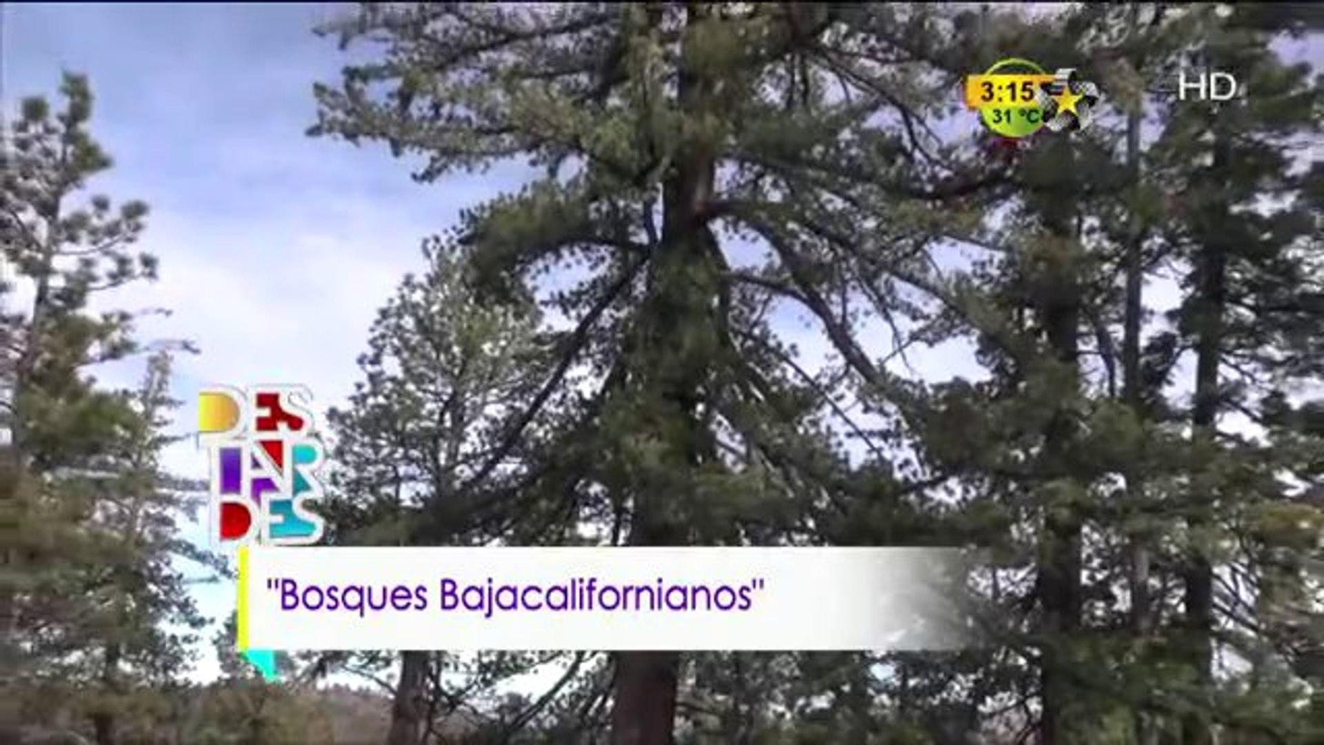 Conexión Jr (Bosques Bajacalifornianos)
