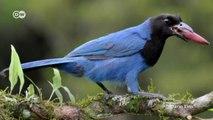 Biodiversidad en Mata Atlántica - Bosques de araucaria en peligro | Global 3000