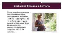 Embarazo Semana A Semana - Conoce Como Va Progresando El Embarazo Semana A Semana