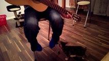 Un chat fasciné par une guitare... Trop mignon