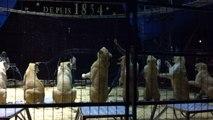 Le dressage des lions blancs du cirque Pinder