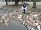 LES LAPINS DE L'ILE JAPONAISE OKUNOSHIMA - Ce lieu est célèbre pour sa population très élevée en lapins. A l'instar, de Nara et de son parc aux daims, de nombreux touristes s'y rendent pour nourrir et caresser les animaux...sauf qu'il s'agit ici de lapins