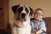 Owen et Haatchi : l'amitié entre un enfant handicapé et un chien à 3 pattes