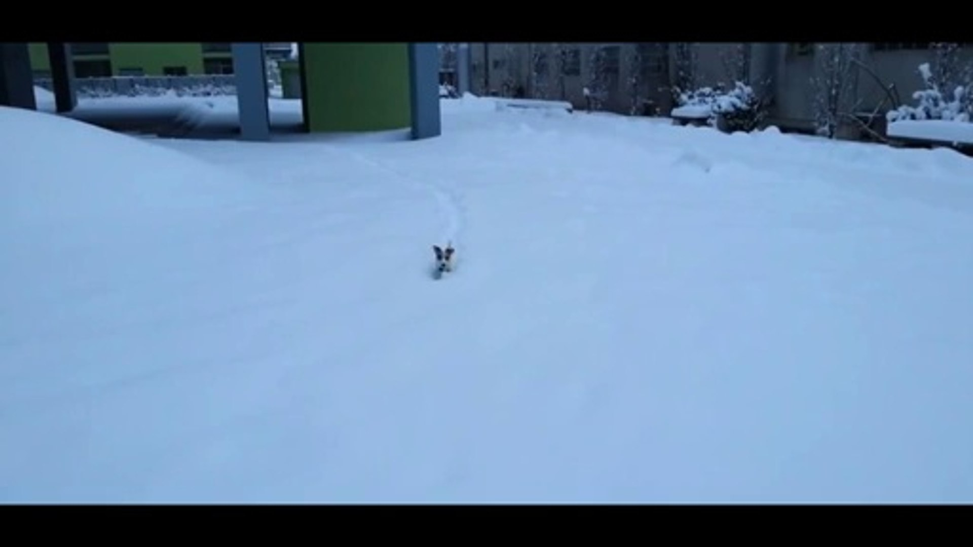 Cute Small Dog Jumping In Snow - Funny Dogs - Cute Dogs