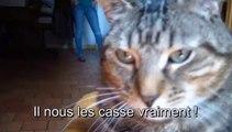 Chapelet de chats pieux - Raphaël Zacharie de IZARRA La figure étoilée vomit du repas pour chenilles