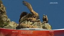 Ushuaia nature - Le rêve d'Icare