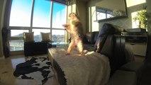 Un chien nul en rattrapage de balle - En slow motion : ridicule et marrant!
