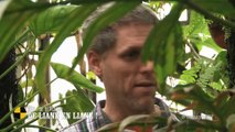 EM92 Peut-on se déplacer de liane en liane comme Tarzan ?