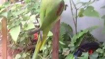 Parrot brids amazing cute new Videos_6